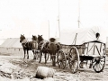 four-mule-army-wagon