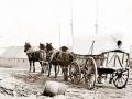 four-mule-army-wagon