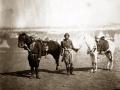servants-nubian-horses
