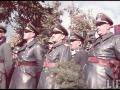 nazi-1_83_1