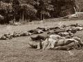 gettysburg-dead-soldiers